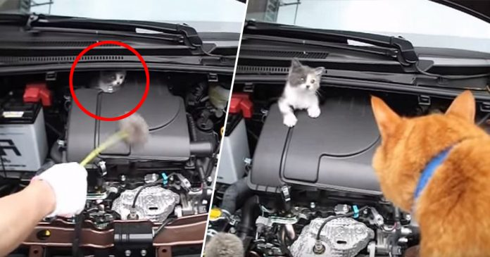 Guna Oyen milik jiran untuk 'bincang' dengan anak kucing yang tidak mahu keluar dari enjin kereta